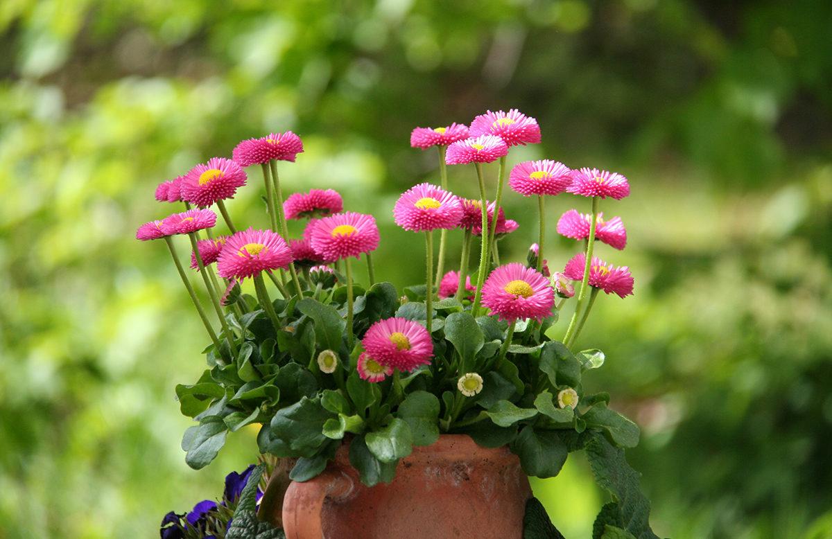 welche sind die beliebtesten frühjahrsblüher? - ratgeber, Gartengerate ideen
